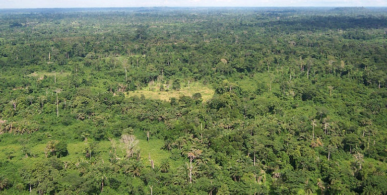 Liberian tropical forest. Image via USAID