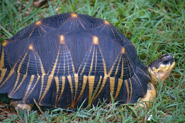More Than 300 Smuggled Tortoises Seized In Malaysia