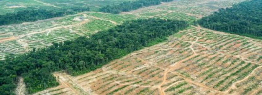 Peru lost more than 1 million hectares of Amazon forest over a period of 15 years