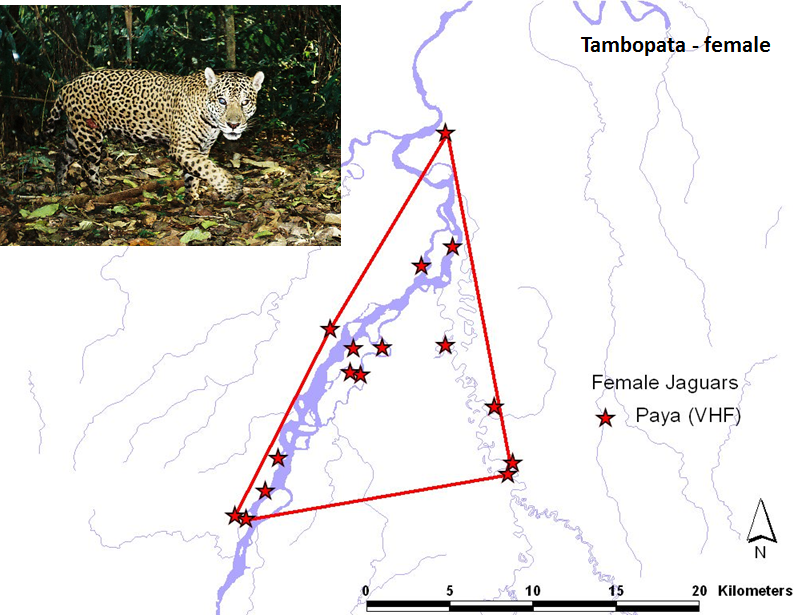 VHF tracking data of a jaguar's use of a floodplain in southeastern Peru.
