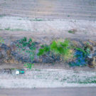 New soy-driven forest destruction exposed in South America