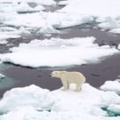 As Arctic sea ice shows record decline, scientists prepare to go blind