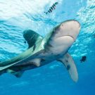 Singapore is world's second largest shark-fin trader: TRAFFIC