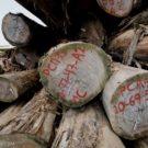Temer seeks to privatize Brazil's deforestation remote sensing program