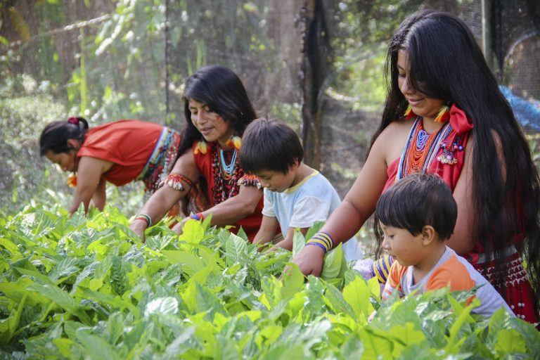 Indigenous Awajún women in Shampuyacu, Peru. Conservation International has worked with these women to designate a forest of their own where they can cultivate traditional plants. Photo by Freddy Guillen.