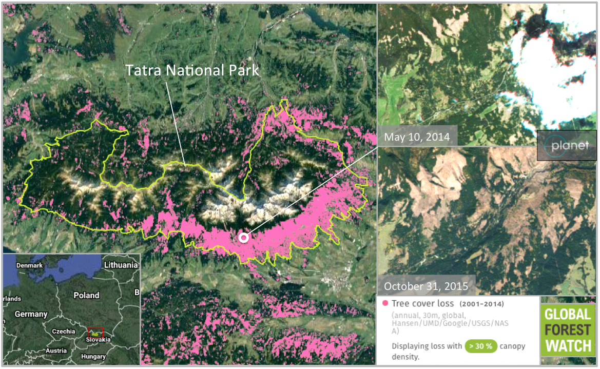 Who wants to go for holiday to see large clear cuts slovakia tatra national park lost nearly 40 percent of its tree cover between 2001 and 2014 according to an analysis of data provided by global forest watch gumiabroncs Image collections