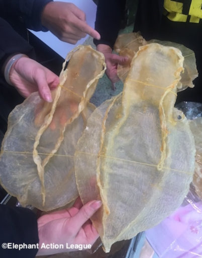Totoaba maws or swim bladders for sale in China