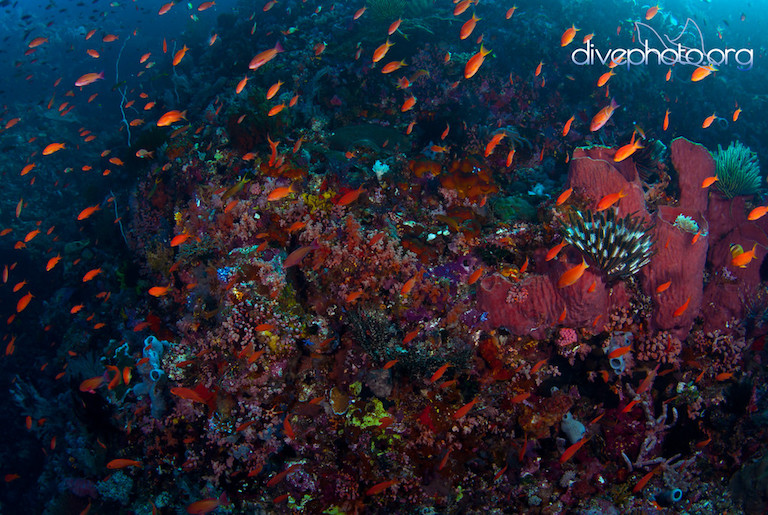 Komodo Island, Indonesia. Photo by Greg Asner/www.Divephoto.org.
