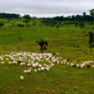 Is intensification of beef production really a solution to Amazonian deforestation?