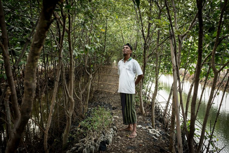 Javan Village saves mangroves