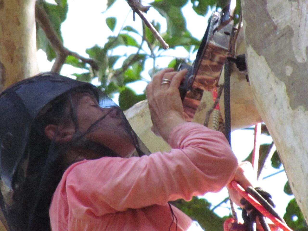 Tremaine Gregory programming a camera trap to monitor a canopy bridge