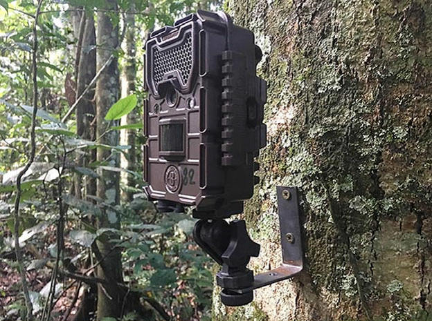 A ball and socket joint like the one used to mount this camera providers flexibility in positioning cameras in trees