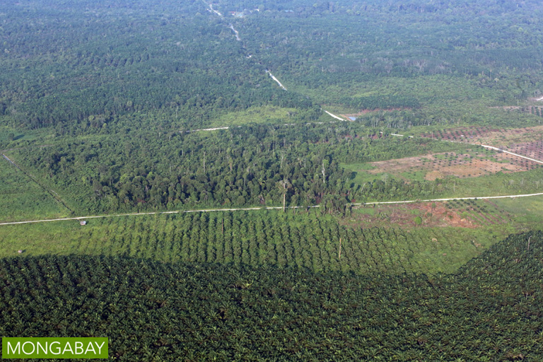 Indonesian candidates find common ground in support for palm oil