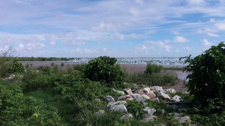 Mangrove restoration site in Better Hope, Guyana. Photo by Carinya Sharples for Mongabay.