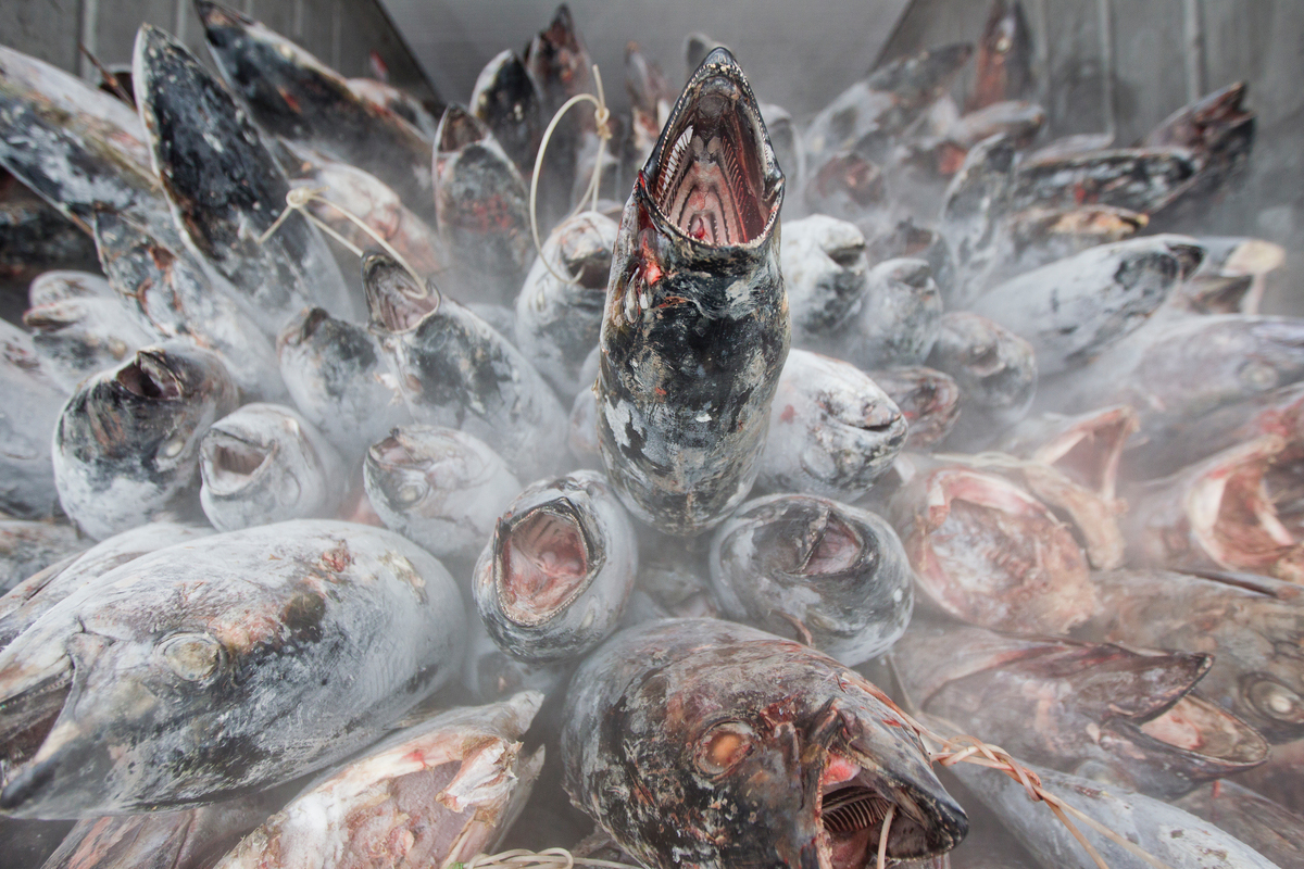 Thai Union Commits to More Sustainable, Socially-Responsible Seafood