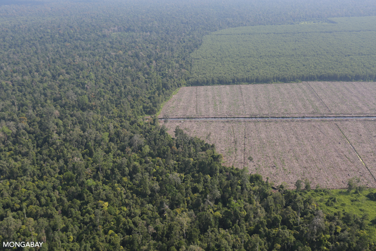 Peat protection rule may be a double-edged sword for Indonesia's forests