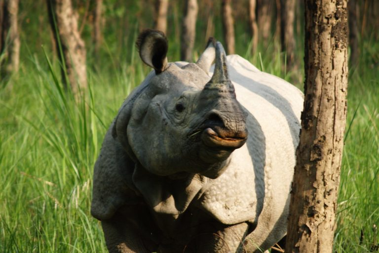 Nepal court blocks road construction in rhino stronghold of Chitwan Park