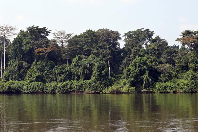 The Ngounié River, one of Gabon's most important waterways, which forms the border of Olam's concession.