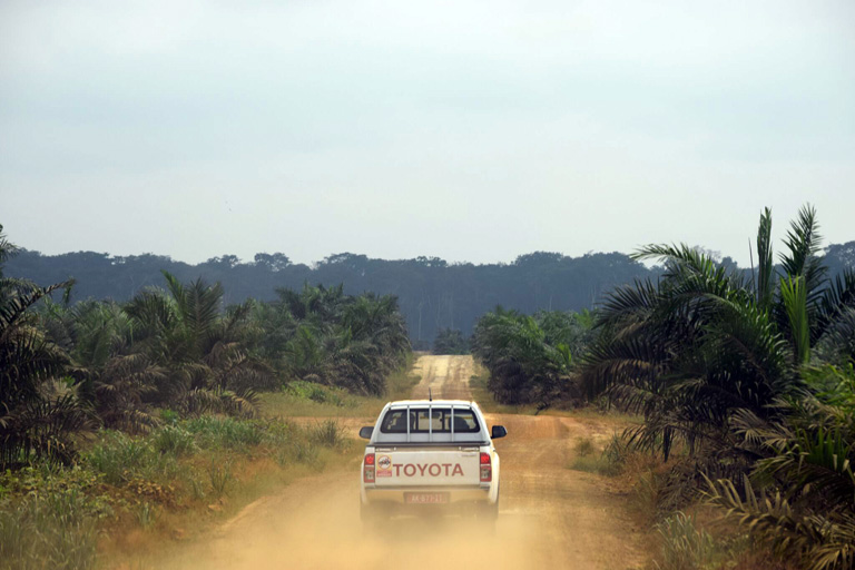 A pickup truck drives down one of the many dirt roads on Olam's Mouila palm oil plantation, coating the trees on the side of the road with dirt. Courtesy of Mighty