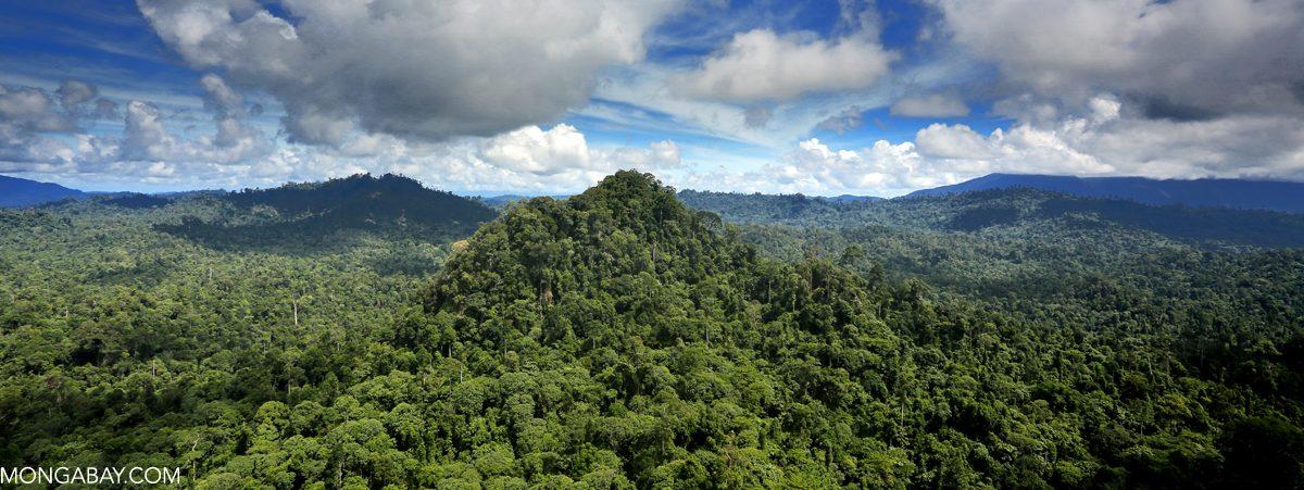 Rainforest in Malaysian Borneo. Photo by Rhett A. Butler for Mongabay.