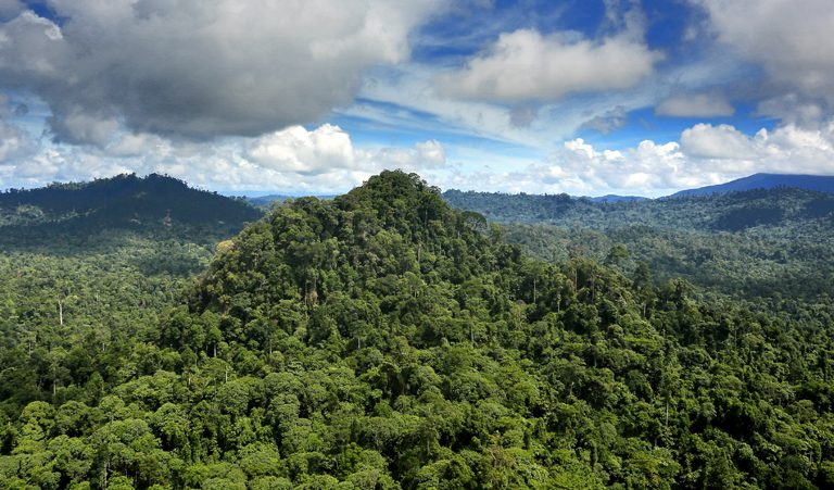 Rainforest in Malaysian Borneo. Photo by Rhett A. Butler for Mongabay.