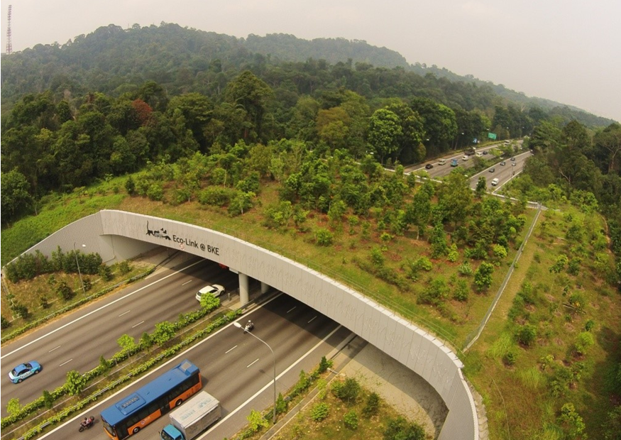 How effective are wildlife corridors like singapore s eco for Design bridge singapore