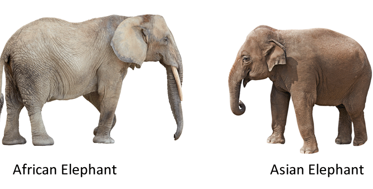 an overview of the story of elephant makoua in africa Overview online professional learning the story of african elephants is a powerful case study for teaching key biological concepts and science practices.