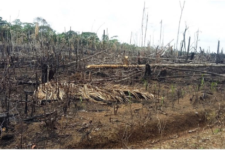 Three of Colombia's eight most critically deforested areas lie in Guaviare, one of the country's departments. Photo courtesy of Semana Sostenible