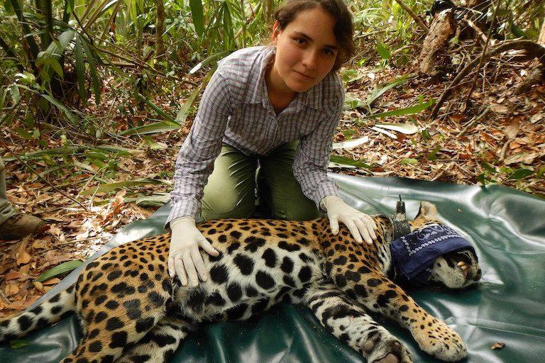Lucero Vaca with a jaguar (Panthera onca). Photo courtesy of Lucero Vaca.