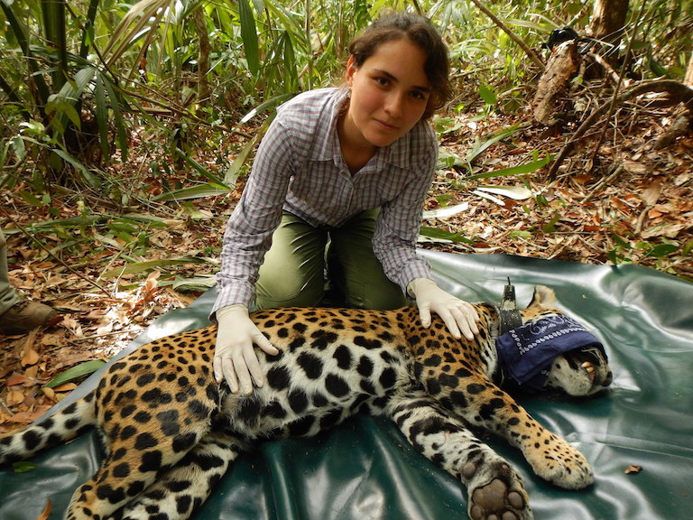 Lucero Vaca with a jaguar (Panthera onca). Photo courtesy of Lucero Vaca.