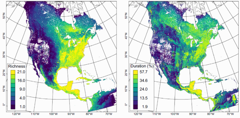 Maps of (a) species richness and (b) duration summarized at a 3.3 x 3.3 km spatial resolution for the 21 migratory bird species in the study. Duration is defined as the percent of the annual cycle the 21 species occur on average within a given geographic region. Both summaries are based on weekly estimates of occurrence for the 21 species.