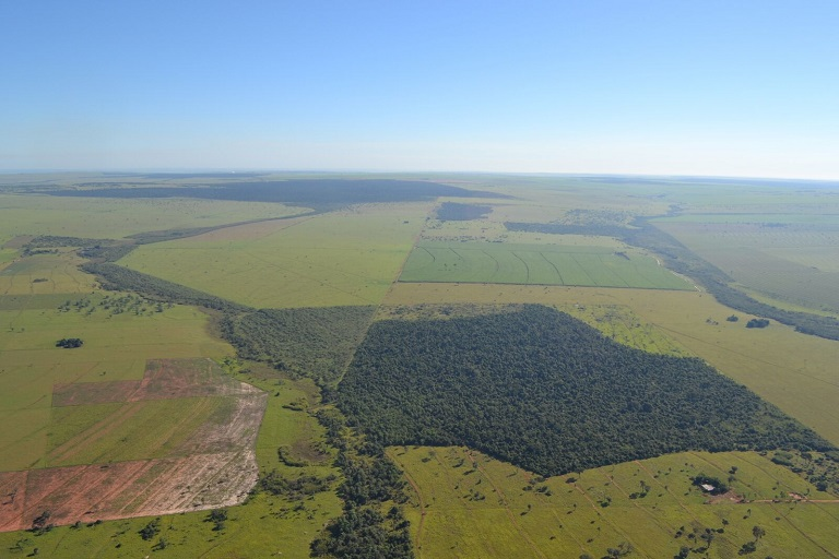 The dark green of restored forest corridors stretches across the landscape across the Pontal de Paranapanema corridor restored by IPÊ in Brazil. Photo courtesy of L. Cullen Jr.