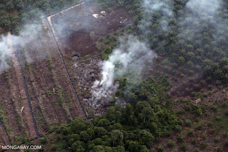 Top court holds Indonesian government liable over 2015 forest fires