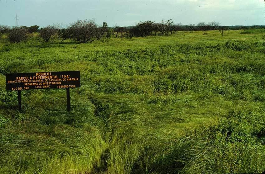 The experimental site in 1997, approximately 18 months after the test deposition.