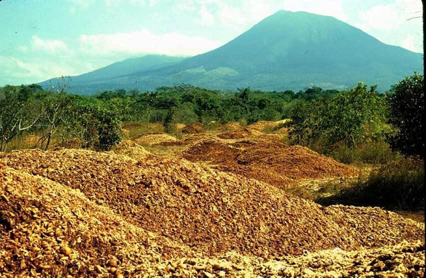 The land immediately after it was loaded with orange waste in the late 1990s.