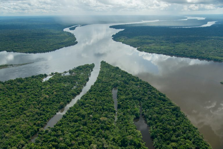 381 new species described from the Amazon over two-year period