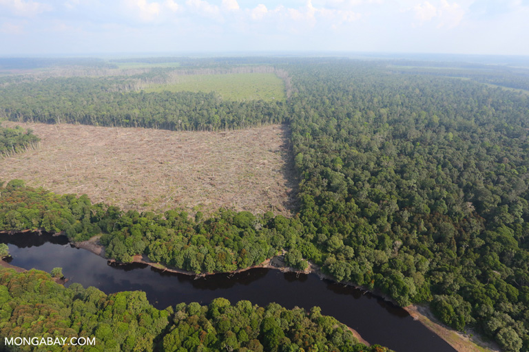 Rainforest clearing for palm oil production in Sumatra, Indonesia. In 2008, Greenpeace targeted Unilever for its palm oil sourcing policy. The company would go on to commit to a zero deforestation policy, which it's now in the process of implementing. Photo by Rhett A. Butler.
