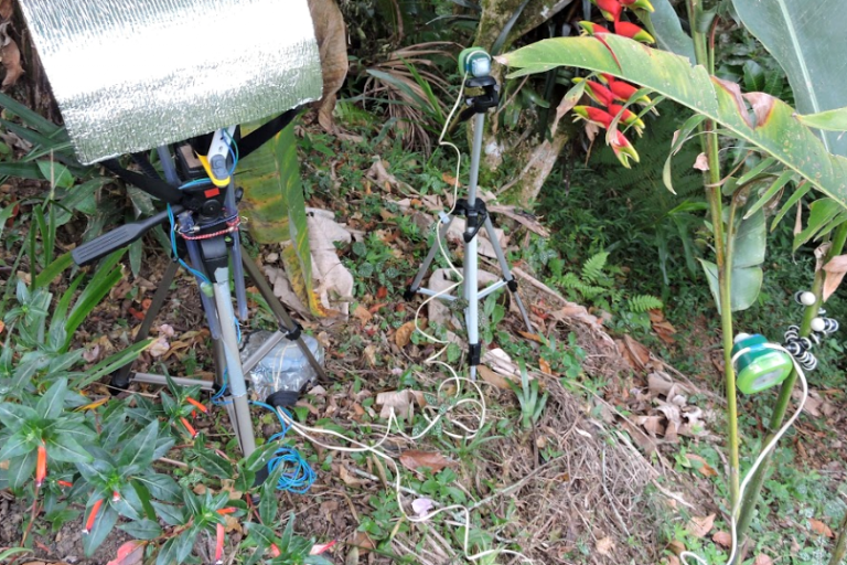 The setup in one hummingbird's territory included a high-speed video camera (covered) connected to two sensors, one on either side of the target flower