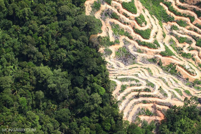 Deforestation in Borneo. Photo by Rhett A. Butler.