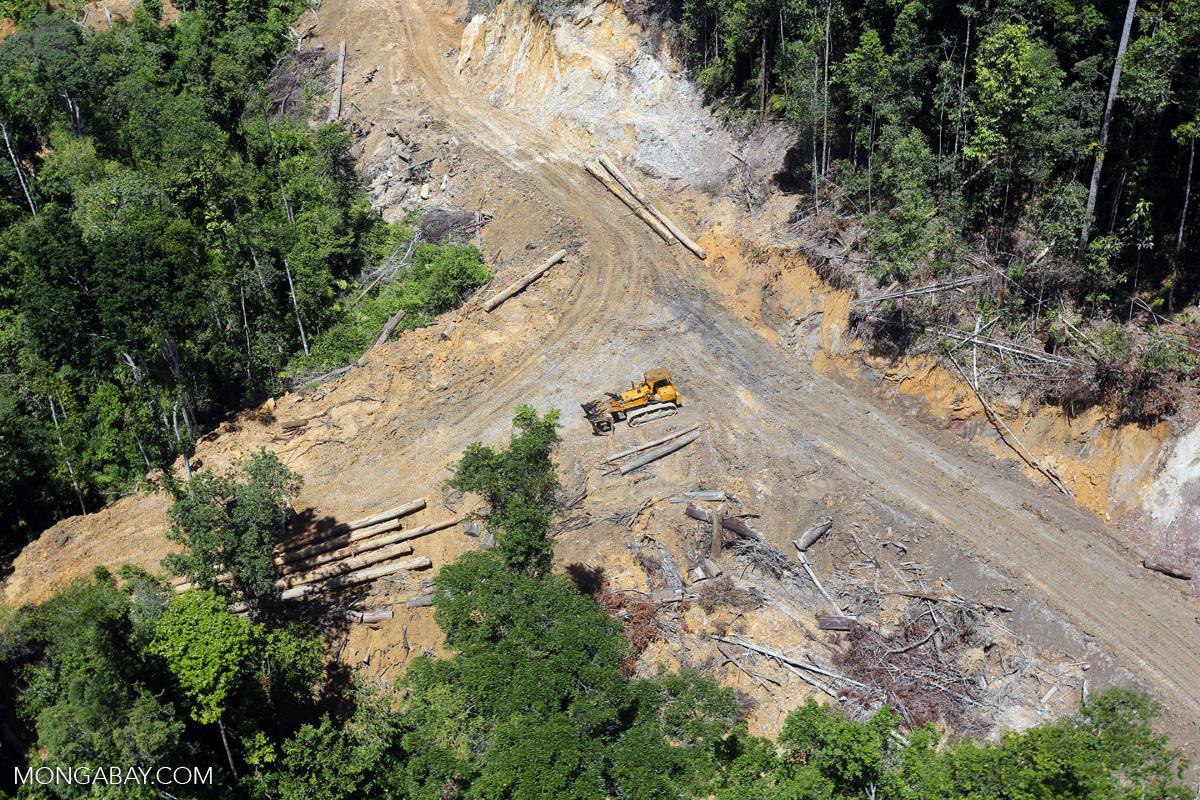Penebangan kayu hutan di Kalimantan. Foto: Rhett a Butler/ Mongabay