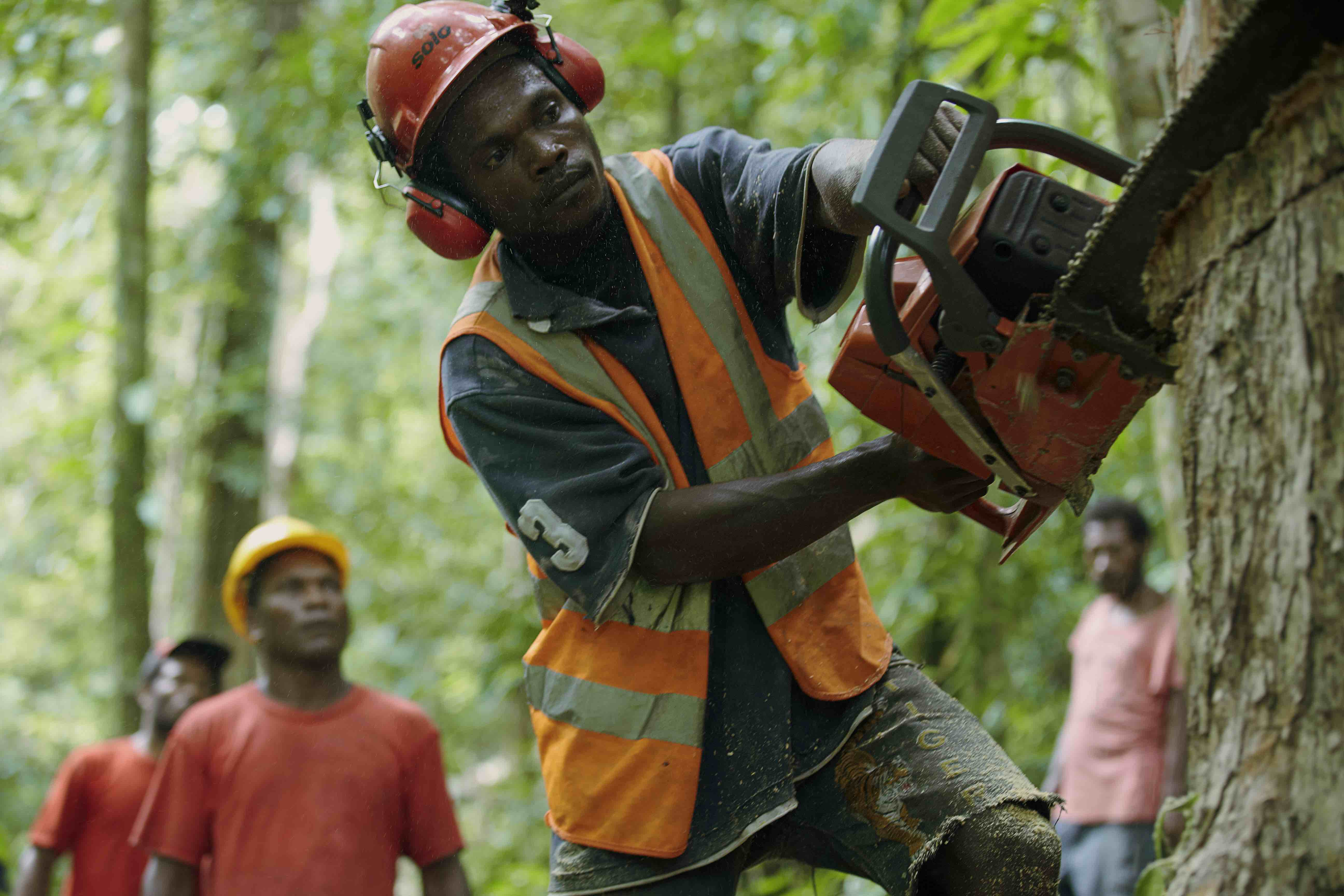 Does forest certification really work?