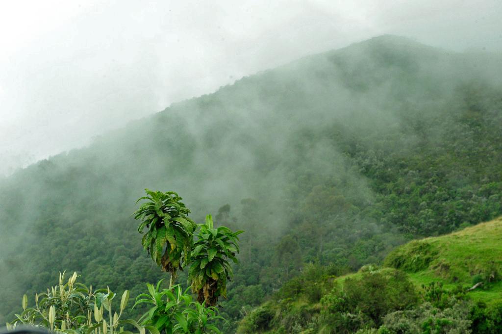 xJulie-Larsen-Maher_7005_Daytime-Landscape-Cloud-Forest_ECU_11-25-08