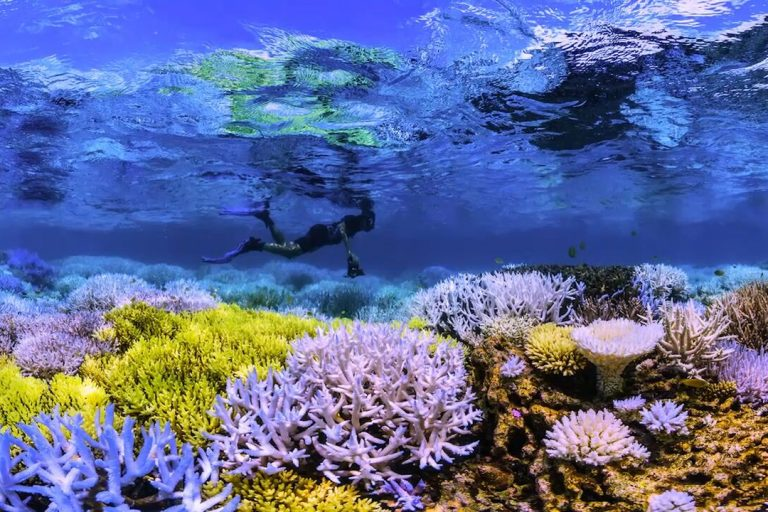 Coral flourescing, a reaction to stressful conditions