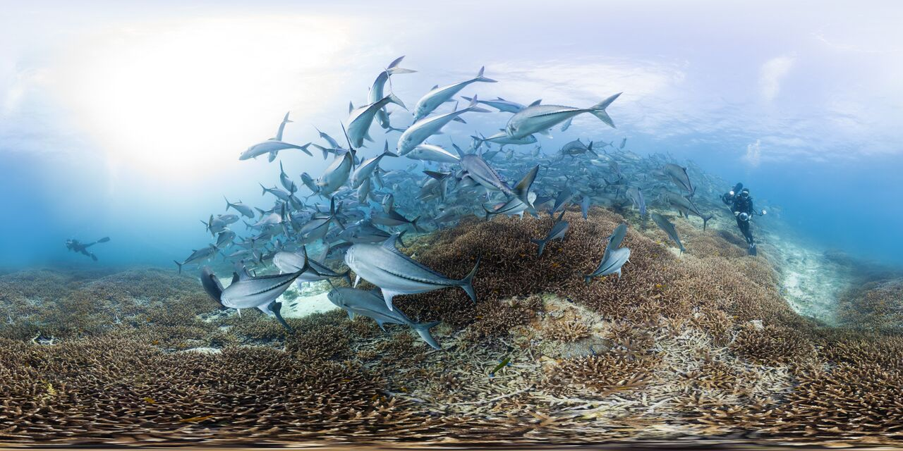 Trevally schooling at Lady Elliot Island, Great Barrier Reef, Australia
