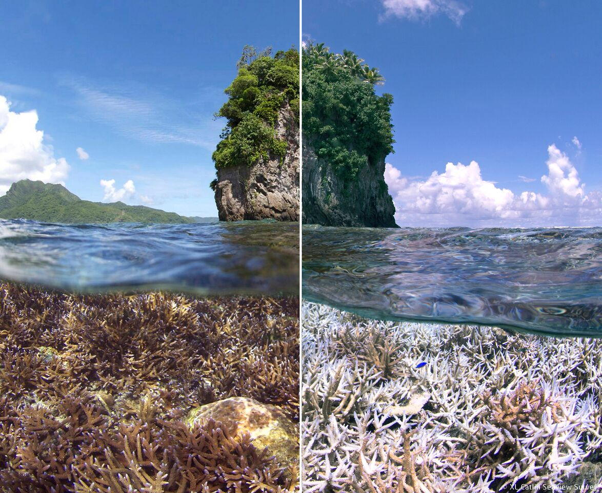 The unseen underwater effects of rising ocean temperatures on coral, here in American-Samoa.