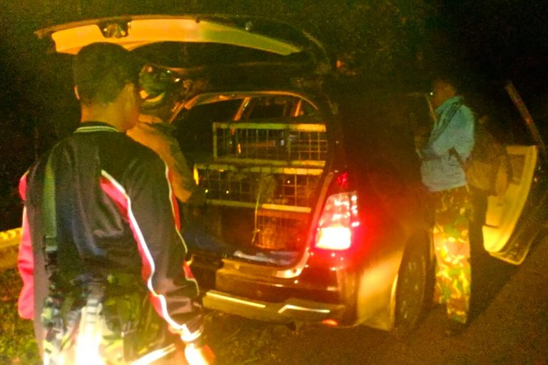 Officers from a conservation agency in West Sumatra detained two soldiers smuggling dozens of Malayan porcupines for sale. Image courtesy of the Pasaman District Natural Resources Conservation Agency.