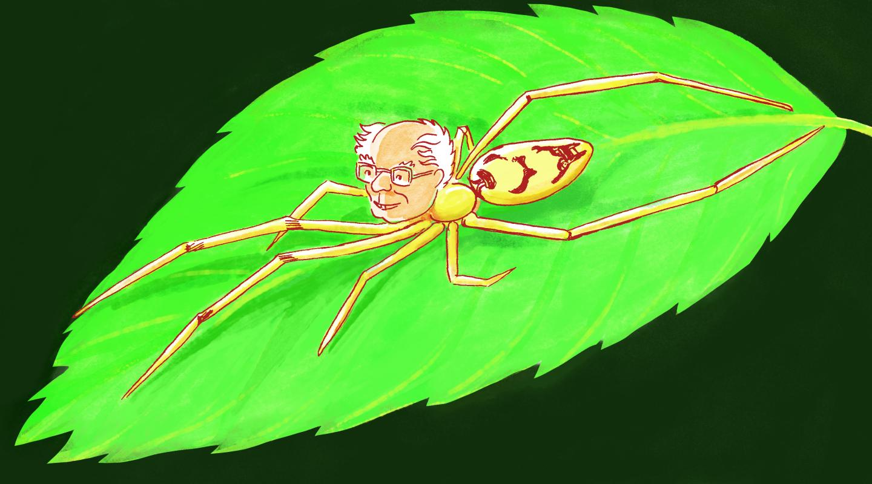 Meet the new Bernie Sanders spider