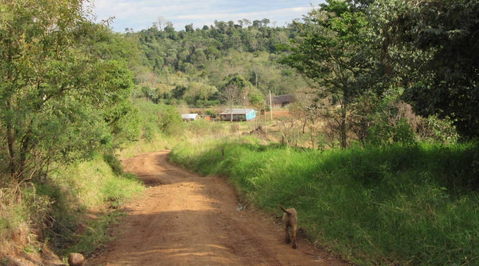 Train working area of native forest, pastures, and a small farm in central Misiones, Argentina