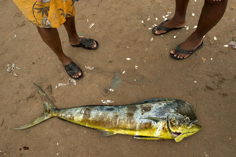 KSmuga-Otto_Fish_KalyanVarma412_5907