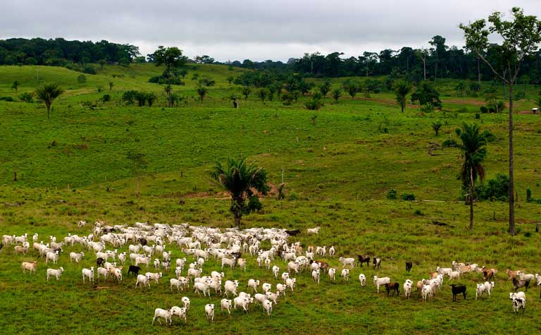Beef production is one of the top causes of tropical deforestation, and contributes heavily to climate change in a variety of ways. Photo credit: CIFOR/Flickr [Licensed under CC BY-NC-ND 2.0]